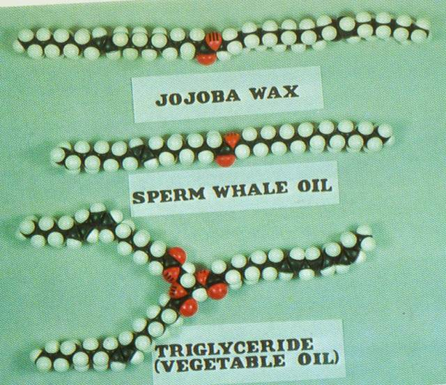 JOJOBA-SPERM%20WHALE-VEG%20OIL%20copy.jpg